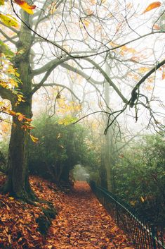 dpcphotography:  Fallen path