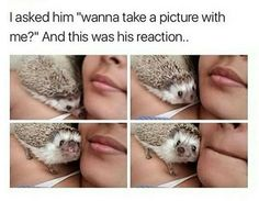 15 Perfect Hedgehog Memes To Make You Laugh Through The Weekend - World's largest collection of cat memes and other animals Funny Wild Animals, Wild Animals Attack, Animal Attack, Cute Animal Memes, Animal Jokes, Funny Animal Pictures, Cute Hedgehog, Hedgehog Pet, Hedgehog Names