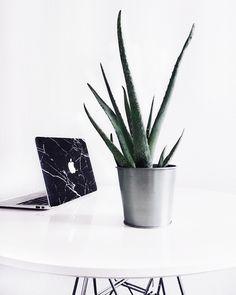 < be authentic > Cactus, Plants Are Friends, Pastel Grunge, Ideas Hogar, No Rain, Black Feathers, Home Interior, Interiores Design, Belle Photo
