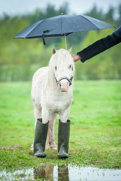 Grab your wellies little pony!                                                                                                                                                     More