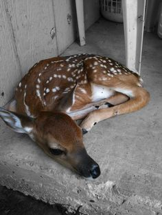Lonely Baby deer by *carvedangel on deviantART.