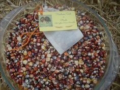 Indian corn seed for corn flour or by YelowHorseMercantile on Etsy