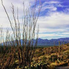Tucson, Arizona (Photo via Instagram by @shalomndahome)