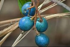 Image result for blue marble tree