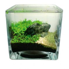 pico aquascape