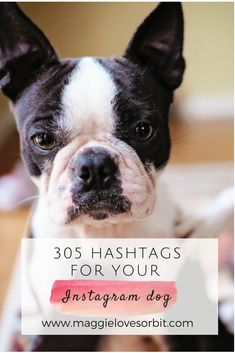 Surprise Your Dog With These Puppy Training Tips! Hashtags Instagram, Instagram Dog, Insta Hashtags, Training Your Puppy, Dog Training Tips, Agility Training, Training Schedule, Training Videos, Dog Agility