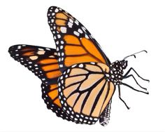 Imagen de butterfly and transparent