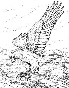 The 11 best Eagle Coloring Pages images on Pinterest   Eagle ...