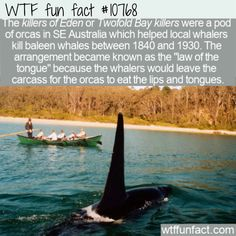 WTF Facts : funny, interesting & weird facts WTF Fun Fact - Killers of Eden 10768 Weird History Facts, Wtf Fun Facts, Funny Facts, Unusual Facts, Interesting Facts, Dog Shaking, Baleen Whales, Daily Facts, Dog Facts