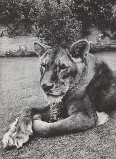 From a vintage readers digest: