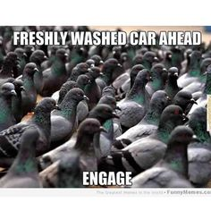 Our Detailing Centre is here to help if the Angry Birds come flying your way ;) #Carmeme #Detailing