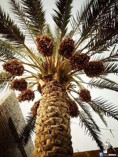 Iraqi People, Red Palm Oil, Flower Garden Plans, Baghdad Iraq, Green Nature, Garden Planning, Nature Pictures, Palms, Marrakech