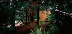 Pine/Cone - SALA Architects