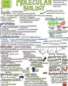 Biologia molecular #medicina #medicalstudent #biologia #molecular