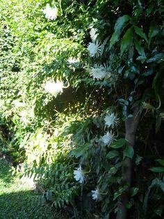 Mi jardín.