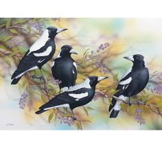 Australian Animals, Australian Art, Art Pictures, Art Images, Magpie Tattoo, Feather Art, Robin, Bird Drawings, Wildlife Art
