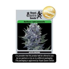 Northern Light is one of the best-known strains of cannabis in the world It rsquo s a mostly Indica strain bred in the 1970s in the USA from Afghani