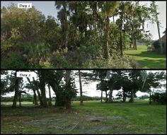 An example of our brush clearing.  Showing a 1/4 acre lot in Port Saint Lucie on the day of commencement, and then another shot at the end of our 3rd day on site.  The Mednick Landscape Company of Palm City specializes in brush clearing, palmetto and property cleanup, and brazilian pepper removal.  We also offer a full scope of landscaping services including installations and property maintenance.