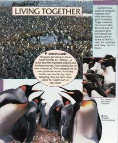 Penguin Facts | Penguin Place Penguin Facts, It Crowd, Penguins, The Voice, Animals, Nature, Animales, Naturaleza, Animaux