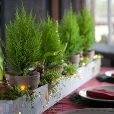 Lemon Cypress Topiary in Gifts For the Hostess 9 Favorites at Terrain Galvanized Trough, Trough Planters, Christmas Town, Holiday Tree, Christmas Ideas, Christmas Brunch, Green Christmas, Holiday Ideas, Merry Christmas