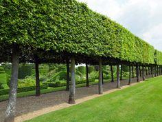 Oak hedge in Hatfield House East Garden Formal Garden Design, Garden Landscape Design, Landscape Architecture, Garden Hedges, Home And Garden Store, Formal Gardens, Outdoor Gardens, Dream Garden, Backyard Landscaping