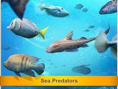 Sea Predators http://wp.me/p3xnRX-6Y #letsfish