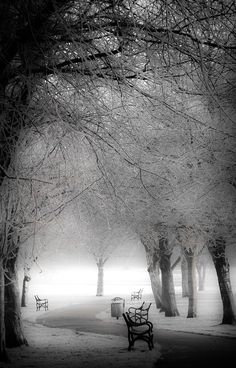 London Park Frosting by Phil Clarkstone on 500px Awesome!!