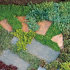 6 modern garden art designs | Pick your look | Sunset.com The ideal groundcovers to grow between pavers form low, tight mounds. Choose your paver type first, then select the plant that looks best beside it––and likes your garden's conditions. Moving clockwise, from top left corner of photo: