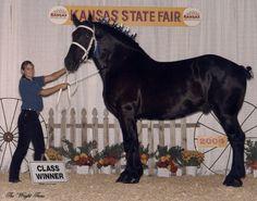 Youth Showmanship Champion at the 2004 Kansas State Fair...what a cutie!