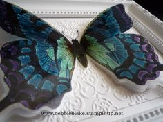 Debbie Blake - Swallowtail close up