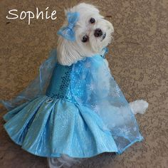 Ice Princess Elsa Custom Dog Halloween Costume by LittleDogFashion Snow Queen Costume, Queen Halloween Costumes, Cute Dog Costumes, Costume Ideas, Pet Fashion, Animal Fashion, Animal Dress Up, Toy Dog Breeds, Pet Boutique
