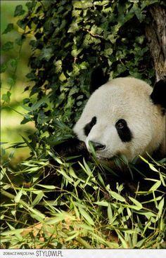 Sometimes I like to eat alone. #Panda