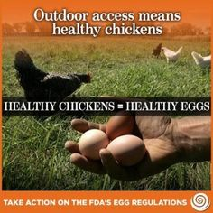 Moms, This One Needs Your Help..for our Children's Future HEALTH! No More Organic Eggs? - Cornucopia Institute.  FDA proposed rule would eliminate outdoor access for chickens.