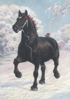 One of the famous Oaklawn Farms Percherons  Dated 1910 George Ford Morris