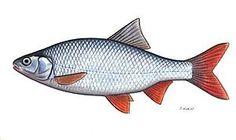 Il pigo di Leonida, parla di un pesce, il pigo e di un ragazzo, Leonida, venuto dall'Ucraina a vivere (e a pescare) in Lomellina. Sarà un anziano pescatore locale ad abbandonare i pregiudizi e a regalare la sua canna da pesca al ragazzo