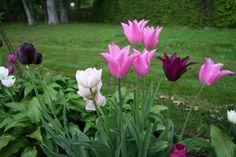 För att få ett vackert vårflor i sin trädgård är det nu på hösten man måste komma ihåg att plantera lökväxter som tupan, krokus, snödroppar, påsk- och pingstliljor och andra härliga vårlökar.   Ge näring för extra skjuts Vårlök kan man plantera ända fram tills marken blir frusen, men ju tidigare på hösten … läs mer här Plants, Flora, Plant
