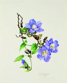 Jessica Tcherepnine - Thunbergia Grandiflora