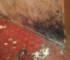 Mold in your home - the causes and solutions. There has been a lot of press on mold in homes and the potential health hazards of black mold lately. At SERVPRO of Newtown & Southern Litchfield County, we talk with many homeowners who are concerned when they discover mold in their home.
