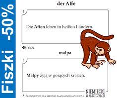 Affe - małpa
