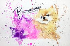 watercolor pomeranian