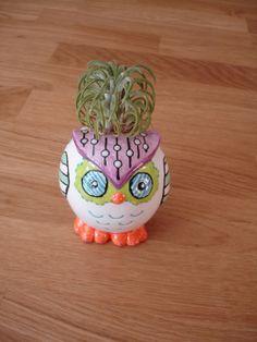 Little Owl Air Plant Holder