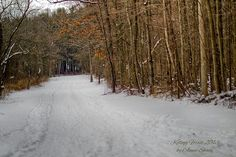 Kellogg forest, Augusta, MI