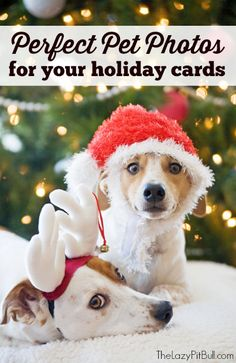 Perfect Pet Photos for Your Holiday Cards | http://www.thelazypitbull.com/2014/11/perfect-pet-photos-for-holiday-cards/