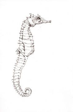 Original black ink drawing on white card stock. Watercolor Animals, Watercolor Art, Seahorse Drawing, Skeleton Drawings, Animal Skeletons, Design Development, Cartoon Drawings, Amazing Art, Art Boards