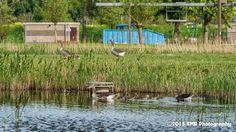 Vogels  by EMR Photography
