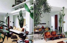 Large indoor plants.