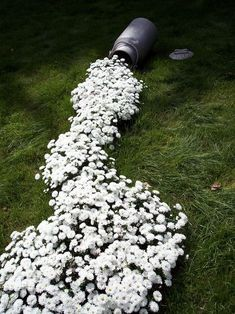 I am going to have to do this in the spring.. planting this down the slope in the backyard. Sooo cute!