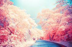 Trees,Pink,Magic,Enchanted,Cute,Beautiful