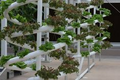 Hydroponics 101 – An Introduction To Hydroponics | #gardening #hydroponics