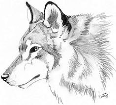 Coloring Pages: Coloring Wolf
